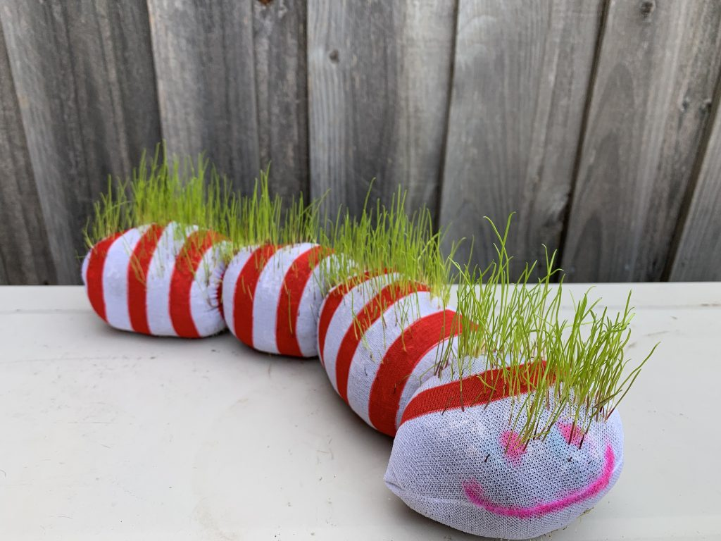 Grass earthworm sprouting