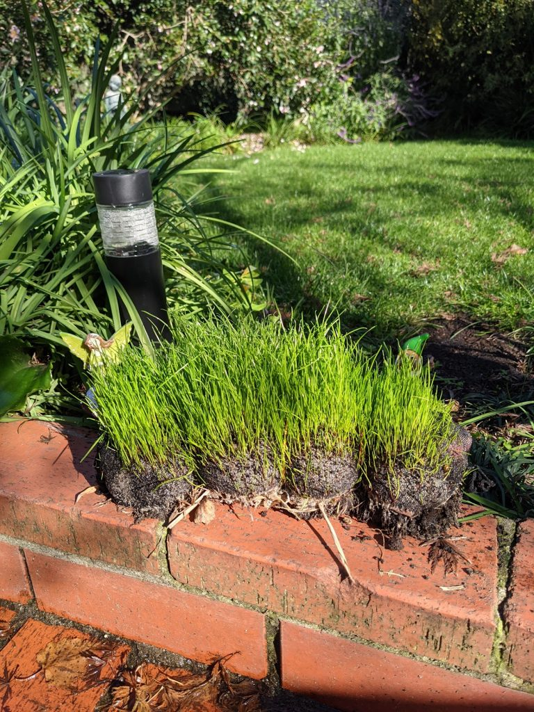 Grass earthworm